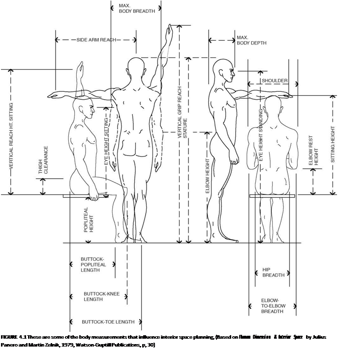 : FIGURE 4.1 These are some of the body measurements that influence  interior space planning