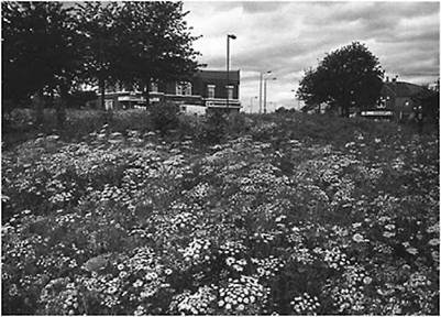 Introduction to naturalistic planting in. urban landscapes