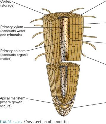 THE STRUCTURE OF PLANT PARTS