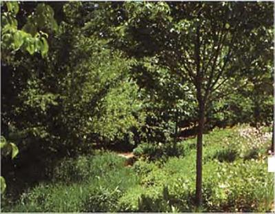 Early successional forest