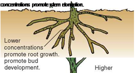. PLANT GROWTH REGULATORS