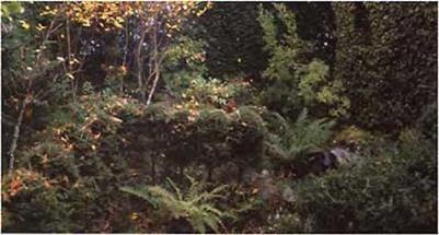 Example of a buffer planting