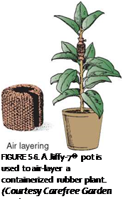 Подпись: FIGURE 5-6. A Jiffy-7® pot is used to air-layer a containerized rubber plant. (Courtesy Carefree Garden Products)