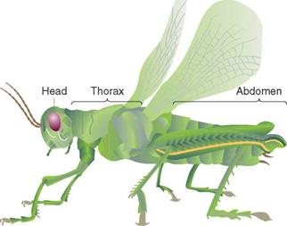 The Classification of Insects