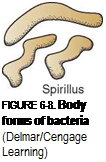 Подпись: FIGURE 6-8. Body forms of bacteria (Delmar/Cengage Learning)