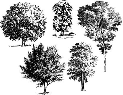 Traditional Drawings of Plants